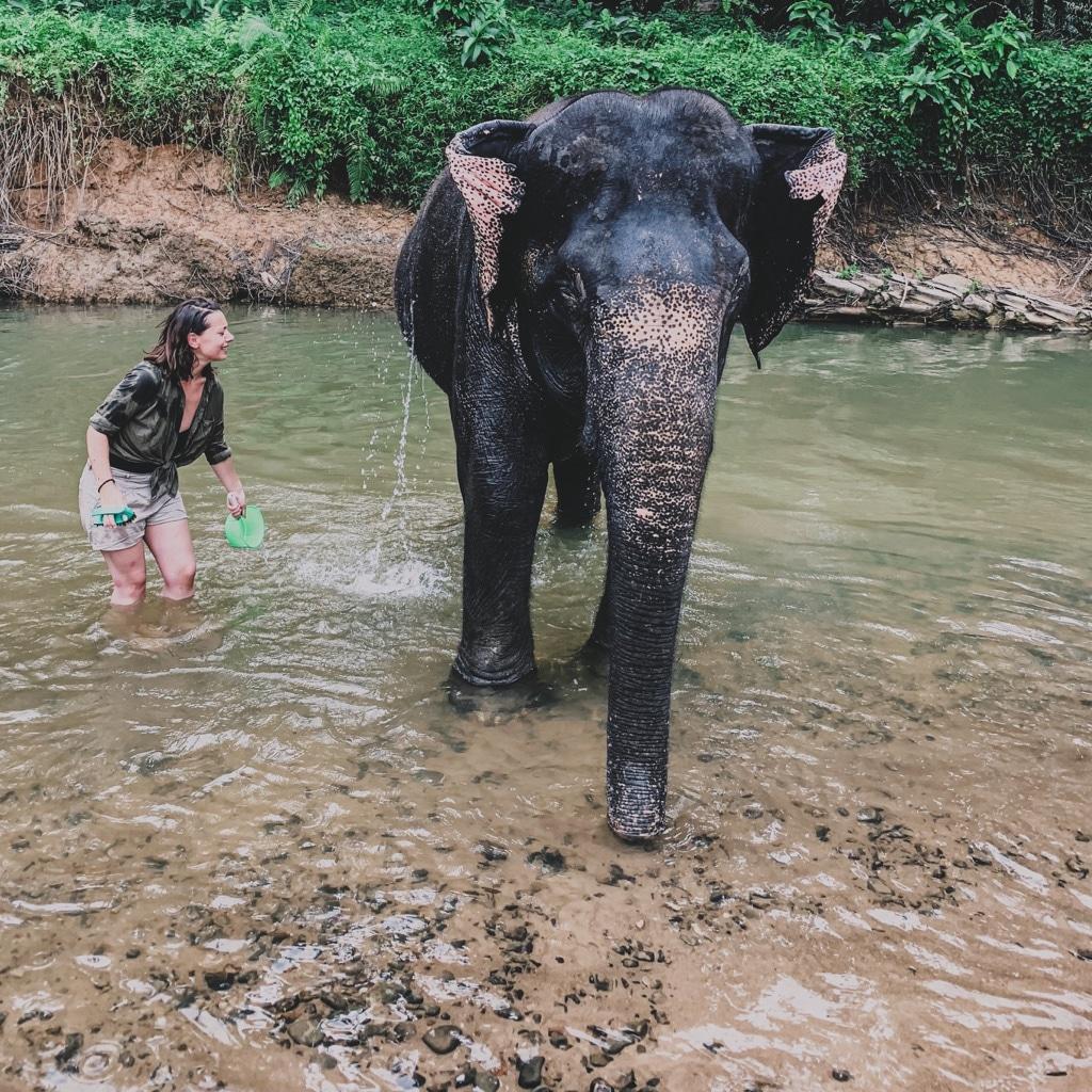 Réserve pour éléphants en Asie Threeminds